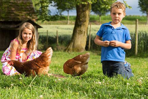 Ferien auf dem Bauernhof am Bodensee